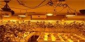 Marijuana Cultivation Warrant