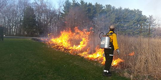 Prescribed-Burn